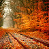 Colorful Trees in Railway Track images