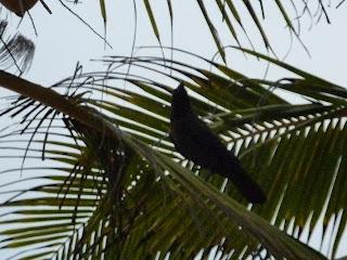 Madilla Tangalle Sri Lanka