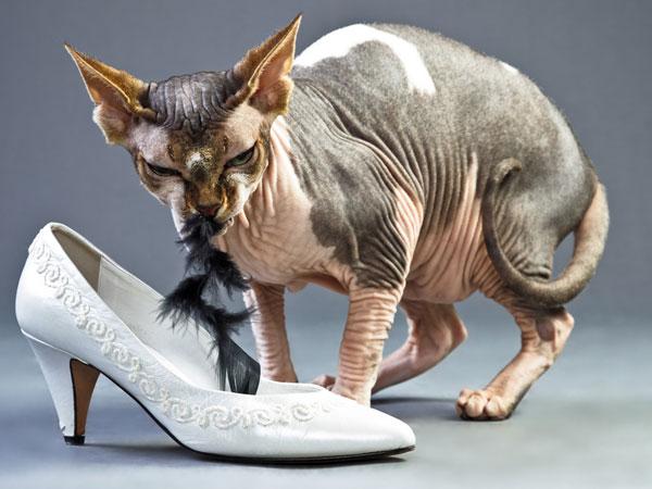 Sphynx Cats For Sale Craigslist >> Modifmotors.html | Autos Weblog