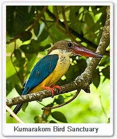 Water Bird Sanctuary Kumarakom Kerala India