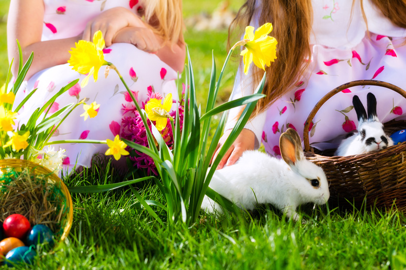 Two children with two pet rabbits and a basket of easter eggs on the grass