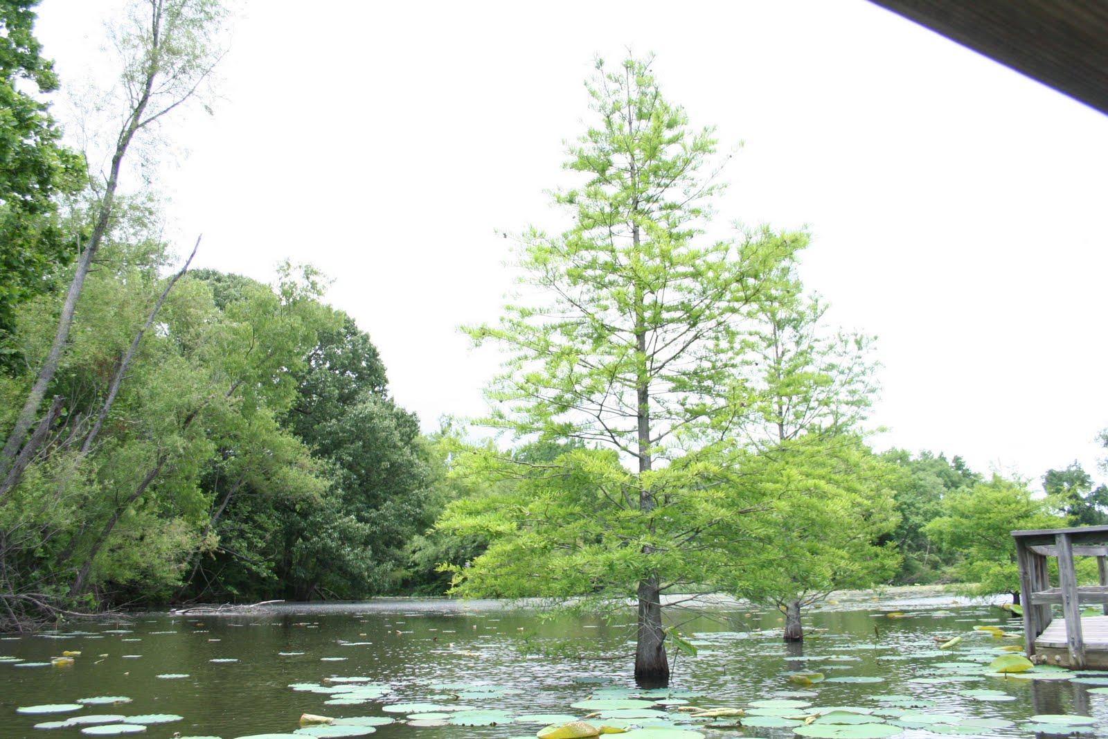 Lichterman Nature Center Hours
