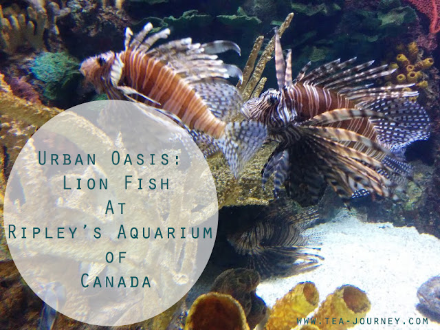 Ripley's Aquarium of Canada in Toronto Lion Fish coral reef Tea Journey