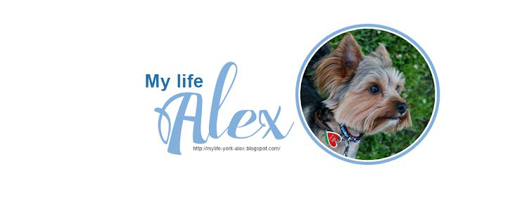 My Life Alex