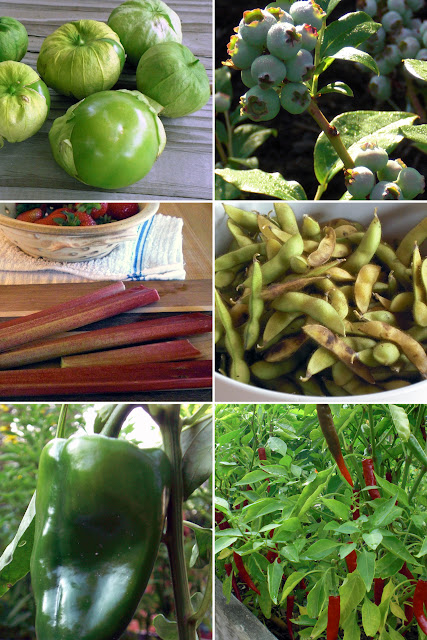 violet fern potager kitchen garden