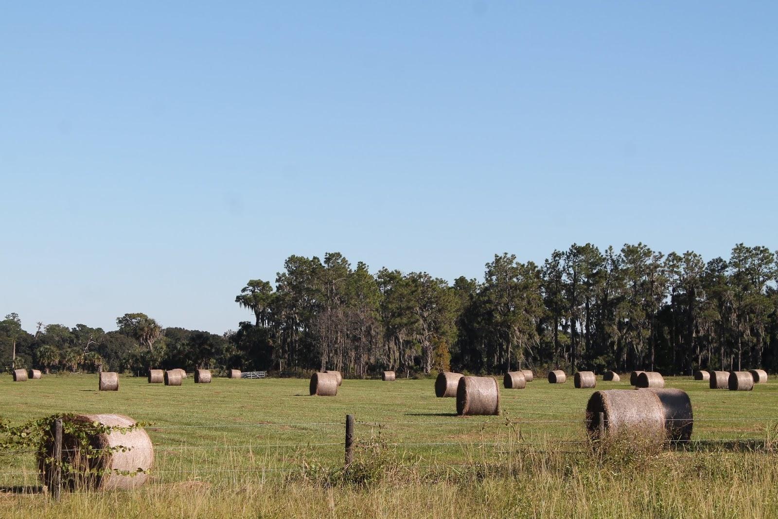 Heno en los campos