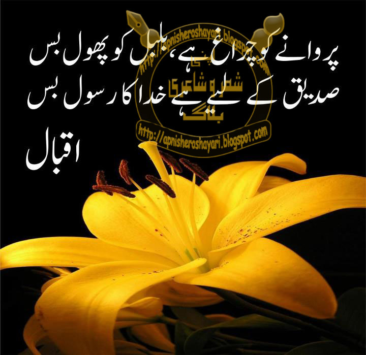 urdu poetry ghazals 720 x 699 107 kb jpeg credited