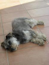 En hund etter ...siesta!