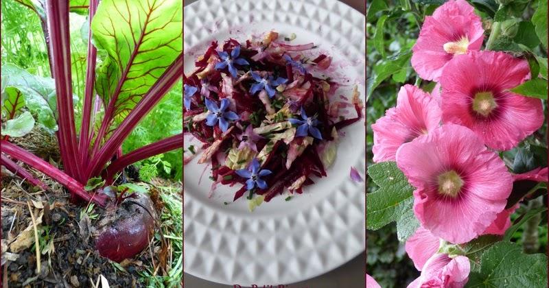 Despetitsriens3 betterave rouge et rose tr mi re - Cuisiner les betteraves rouges ...