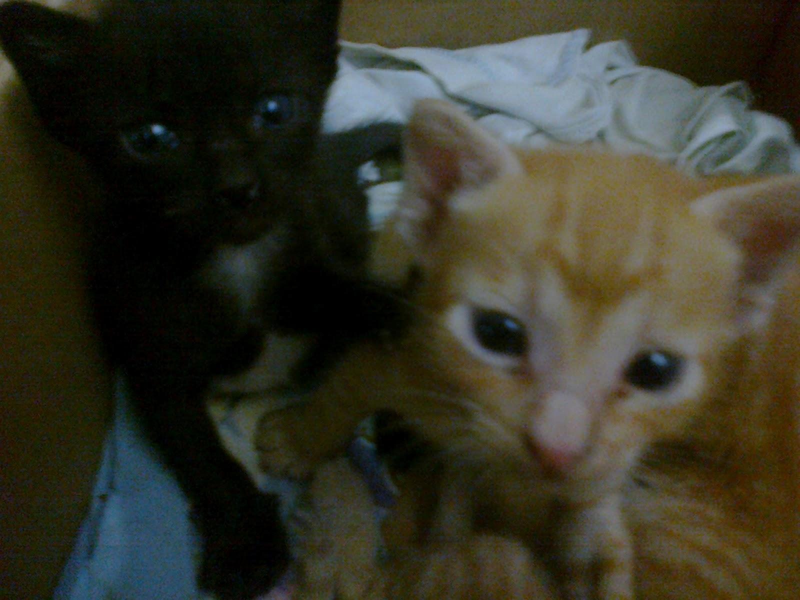 Marie S Blog My Story Tips Merawat Anak Kucing Tanpa