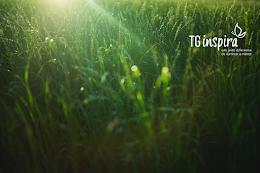 Conheça o site TG Inspira