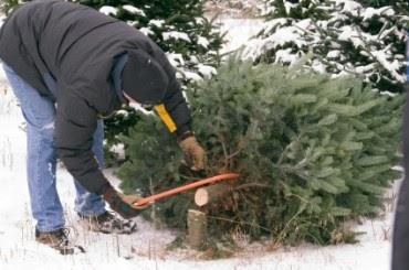 Enjoy Utah!: Cut Your Own Christmas Tree