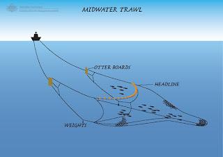 jaring trawl