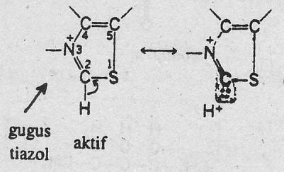 Tiamin diabsorbsisecara aktif terutama di duodenum bagian atas yang ...