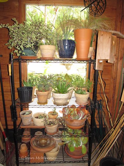 succulents in the storeroom