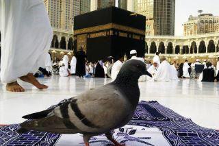 HAJJ Day Mubarak.