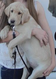Puppy #2: Katrina
