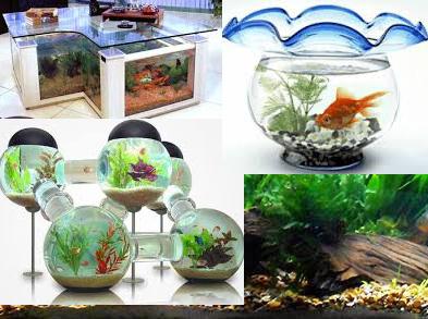 Manfaat Akuarium Dan Tips Memelihara Ikan Sebagai Dekorasi
