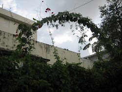 BOUGANVILLEA ARCH