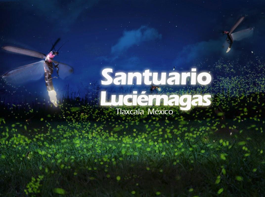 Visita al santuario de las luci rnagas en tlaxcala Espectaculo de luciernagas en tlaxcala