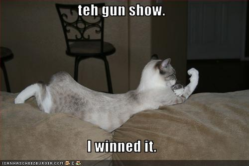 Funny Kittens With Gun Car