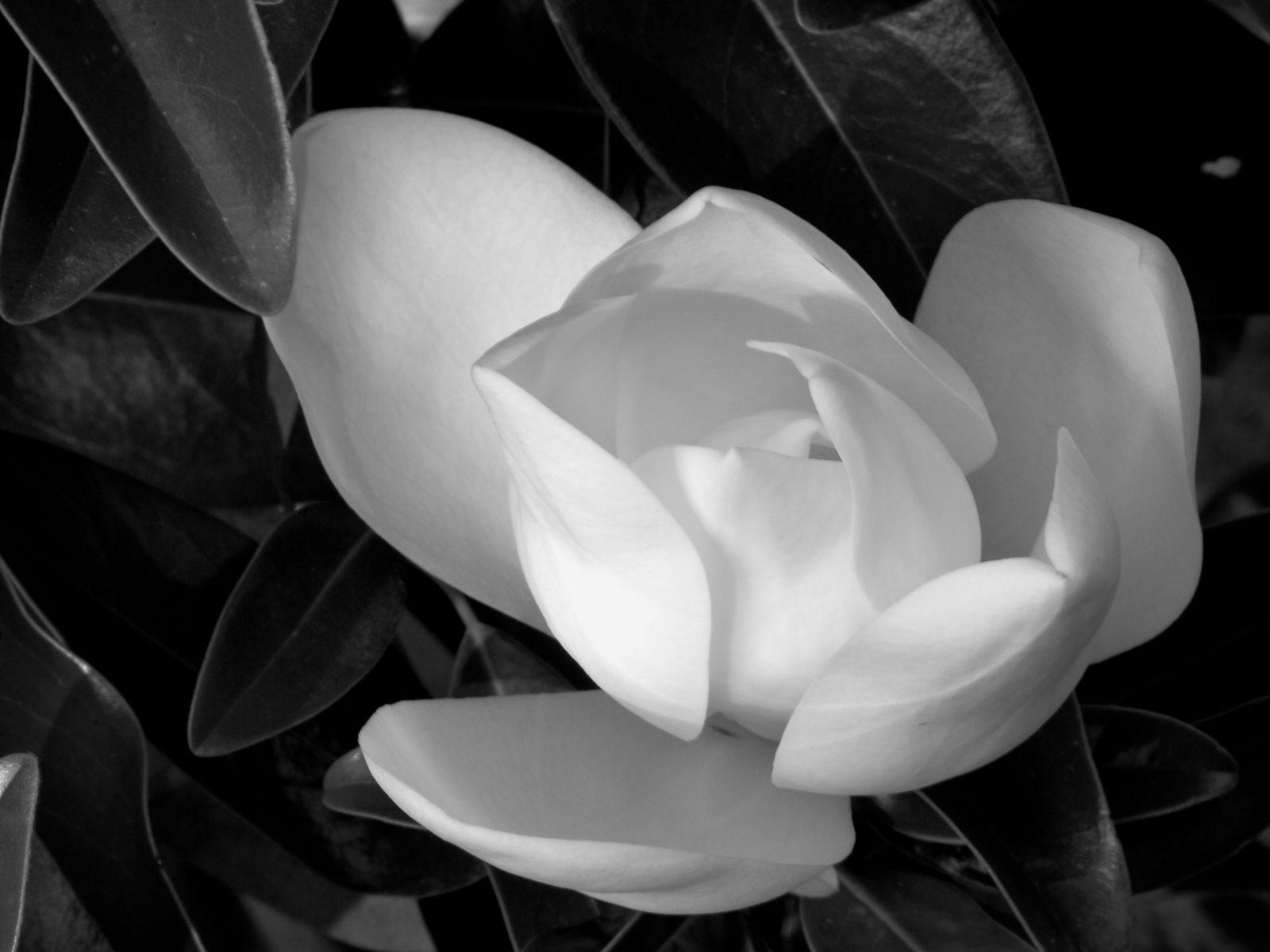 Imágenes de flores  EJERCICIO+3