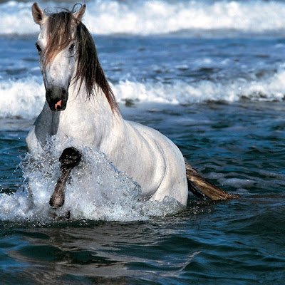 White Horse Running in Water-Wallpaper