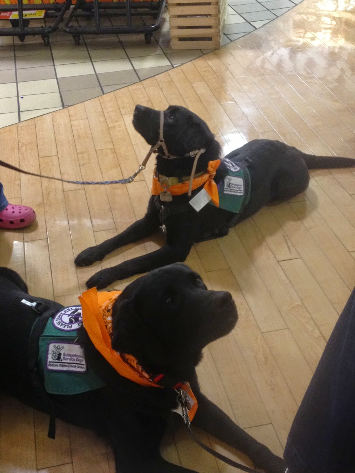 Susquehanna Service Dogs Volunteer