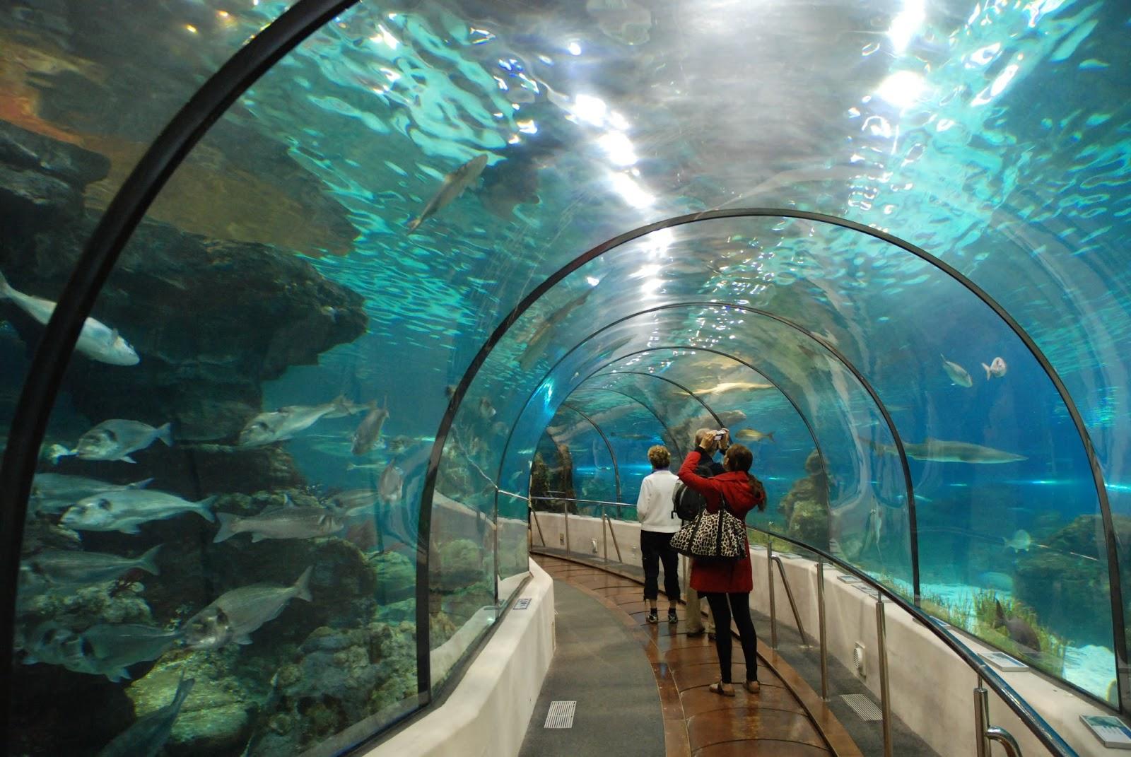 Fish aquarium in jeddah - Dubai Aquarium And Underwater Zoo