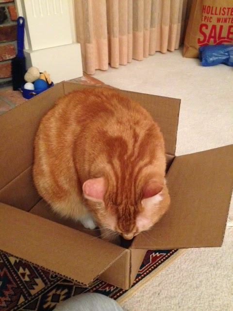 Ripple sniffing box