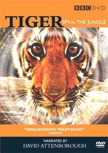 Loài Hổ: Gián Điệp Rừng Xanh ...