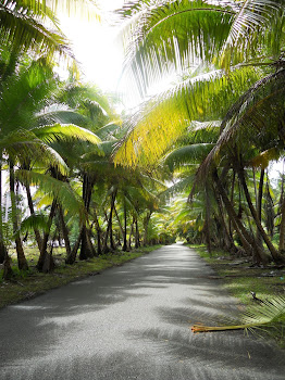 The road to Laura is lush and wooded with palm trees.