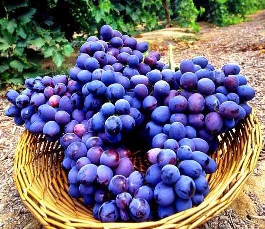 Dieta da Uva: como fazer, benefícios e dicas para emagrecer comendo uvas!