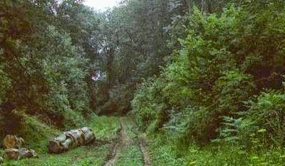 Hutan Wychwood, Inggris