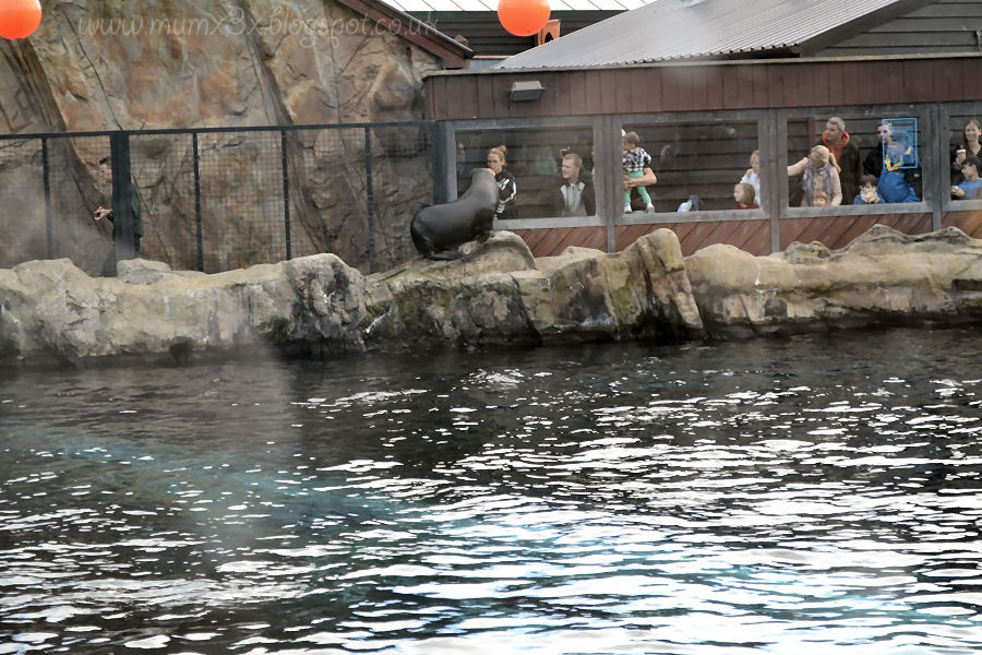Sea lion @ ups and downs, smiles and frowns.