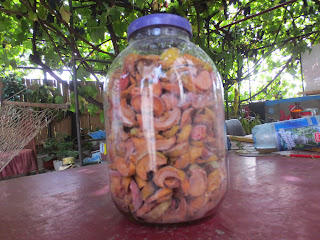 dried apples in the glass jar