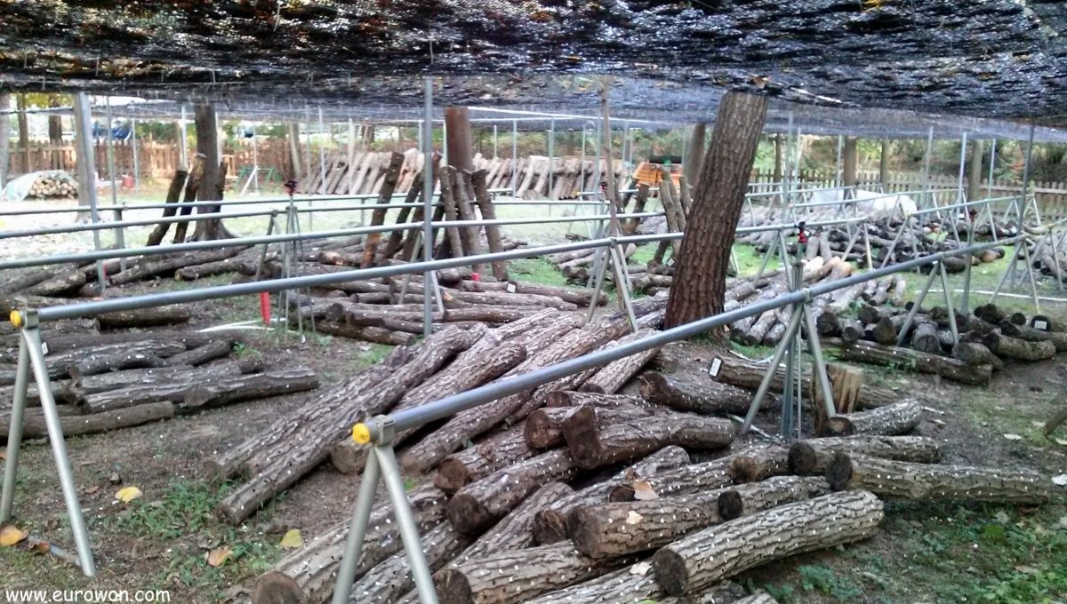 Criadero de setas pyogo en el Arboreto Hongneung de Seúl