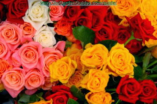 Colorful Various Bouquet of Pink Yellow and Red Roses