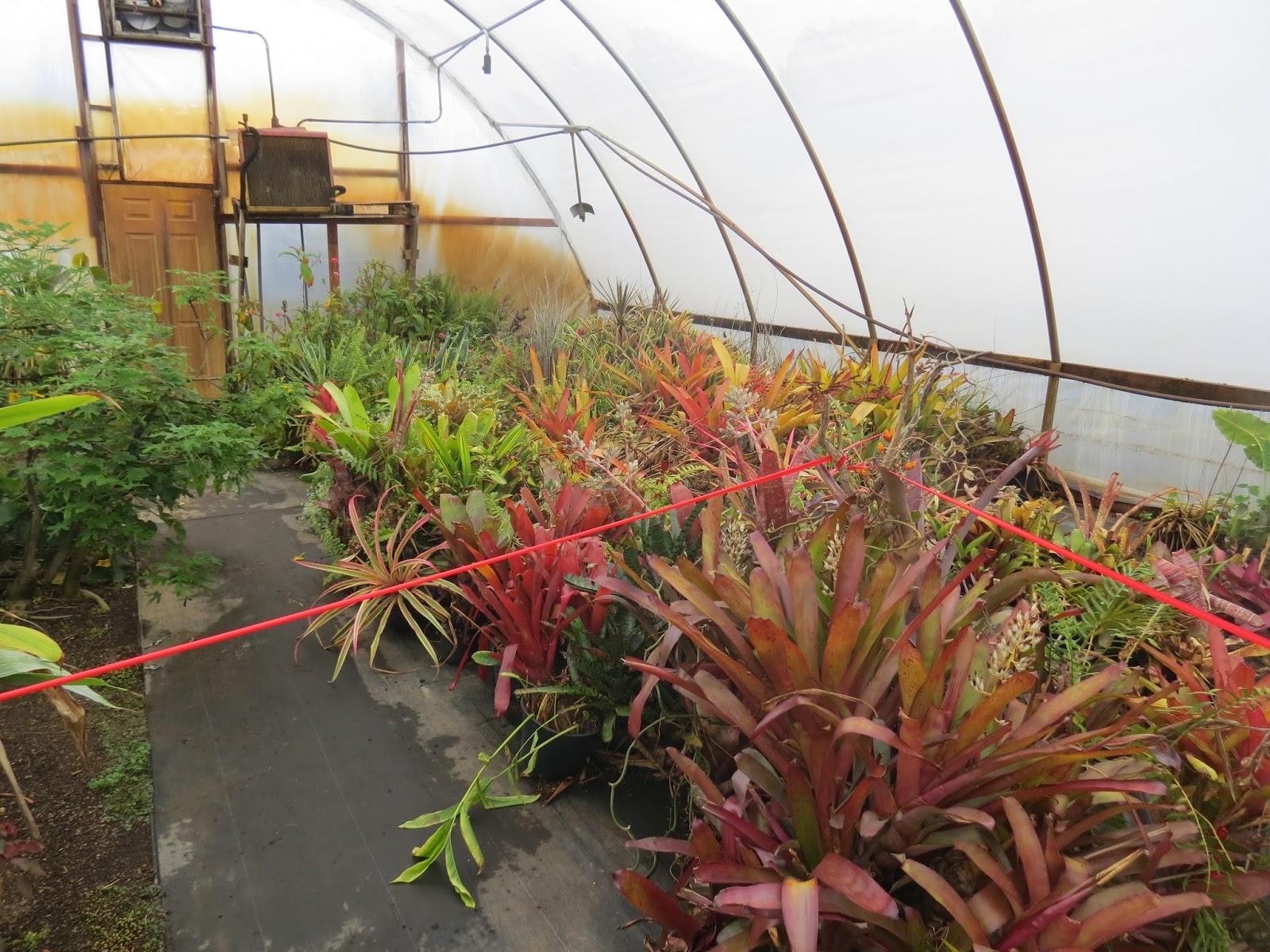 Rare Plant Research Open Garden