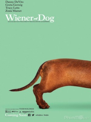 Chú Chó May Mắn / Giải Đua Chó Thế Giới