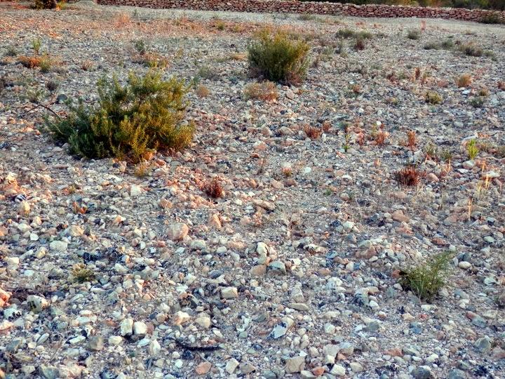 En suelo pedregoso for Suelos para jardines fotos