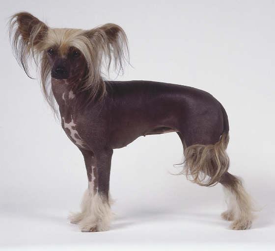 Dog Breeds  Browse 151 dog breeds  Petfinder