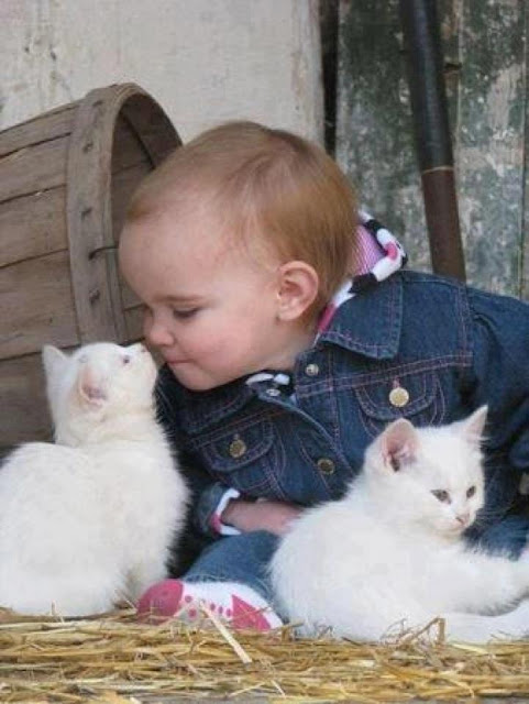 Baby playing with Little Kittens pictures