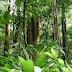 Αμαζονίος: Βρέθηκαν πανάρχαιες «κατασκευές» που χρονολογούνται πριν από το μεγάλο δάσος