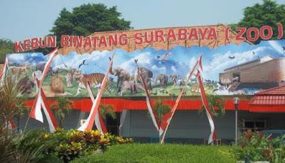 Kebun Binatang Surabaya Membutuhkan Direksi