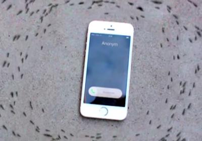 Δείτε τι θα κάνουν τα μυρμήγκια όταν το smartphone δεχτεί κλήση