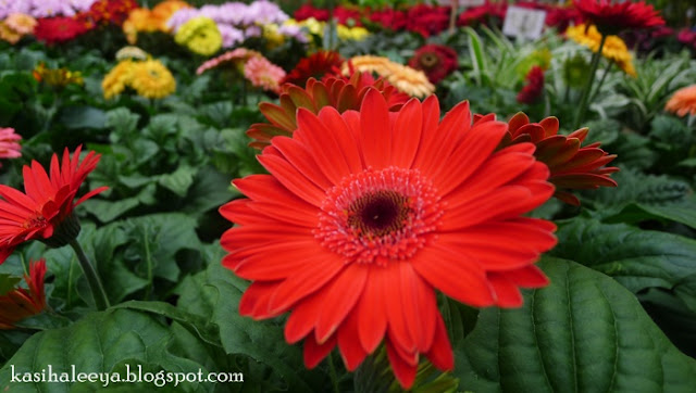 Gambar Keindahan Flora Yer Kan Pencinta Dan Fauna Auw