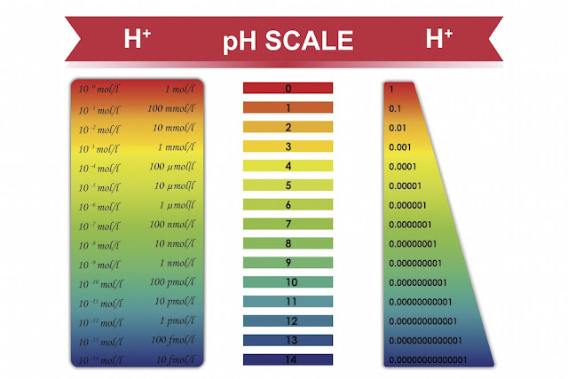 The Truth About Alkalizing Your Blood  Ph%2Bscale