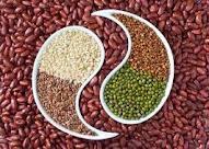 makanan tinggi protein nabati