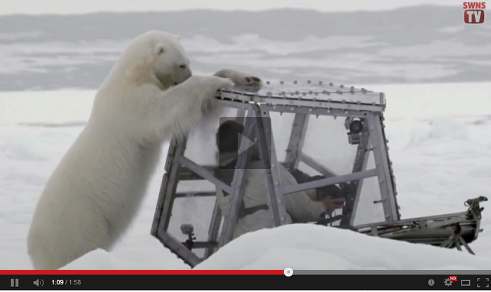 The Terrifying Moment When Cameraman Comes Face-to-Face With A 1,000kg Polar Bear Looking For Its Next Meal